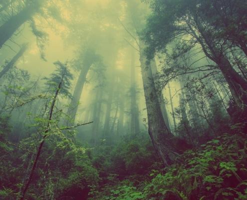 Waldbaden